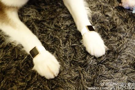 中国の大富豪の息子が愛犬にApple Watch Edition