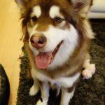 犬用アップルウォッチってありました?中国のペット犬の両足にApple Watch Editionが